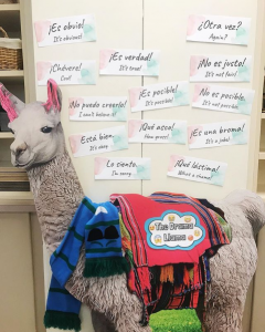 Cardboard llama surrounded by Spanish phrases